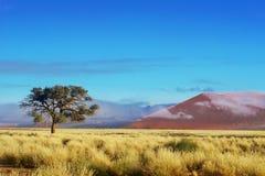 Dunes de désert de Namib, Namibie, Afrique Photos libres de droits