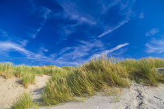 Dunes at De Haan, Belgian north sea coast against blue skyline Royalty Free Stock Images