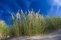Dunes at De Haan, Belgian north sea coast against blue skyline Royalty Free Stock Image