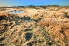 Dunes de l'hiver Photos libres de droits
