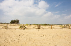 Dunes de La Marina Royalty Free Stock Photos