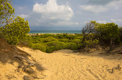 Dunes de La Marina Royalty Free Stock Photography