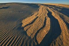 Dunes de sable argentées de lac Image stock