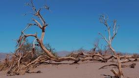 Dunes de sable au parc national de Death Valley - dunes de sable plates de mesquite clips vidéos