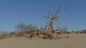 Dunes de sable au parc national de Death Valley - dunes de sable plates de mesquite banque de vidéos