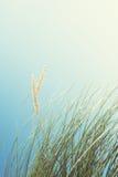 Dunes de sable avec l'herbe grande et le ciel bleu, Luskentyr Photo libre de droits