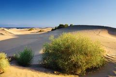 Dunes de sable avec le buisson. Image stock