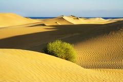 Dunes de sable avec un buisson. Image libre de droits