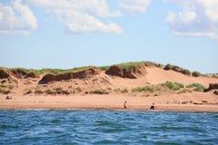 Dunes de sable d'île Prince Edouard Photos stock