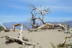 Dunes de sable dans Death Valley photo libre de droits