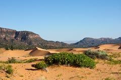 Dunes de sable de corail roses Photographie stock libre de droits