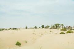 Dunes de sable de désert avec des buissons et des arbres Photographie stock libre de droits