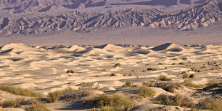 Dunes de sable de mesquite de Death Valley Photos libres de droits