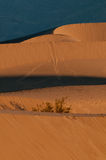 Dunes de sable de mesquite en stationnement national de Death Valley Image libre de droits