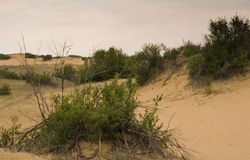 Dunes de sable de Saskatchewan Photographie stock