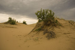Dunes de sable de Saskatchewan Photos libres de droits