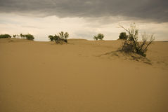 Dunes de sable de Saskatchewan Photos stock