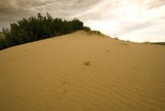 Dunes de sable de Saskatchewan Image libre de droits
