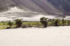 Dunes de sable de vallée de nubra avec des arbres le long de lit de rivière à l'arrière-plan photographie stock libre de droits