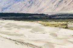 Dunes de sable de vallée de nubra avec des arbres le long de lit de rivière à l'arrière-plan image libre de droits