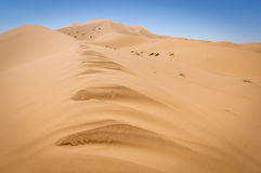 Dunes de sable du Sahara photo stock
