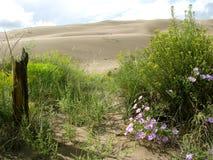 Dunes de sable grandes Photo stock