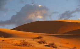 Dunes de sable impériales Images stock