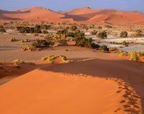 Dunes de sable namibiennes Image libre de droits