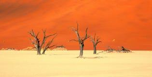 Dunes de sable oranges et arbres morts chez Deadvlei Namibie photos stock