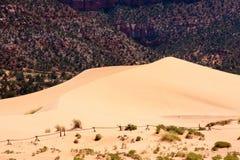 Dunes de sable roses de corail Image stock