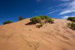 Dunes de sable roses de corail Photographie stock libre de droits