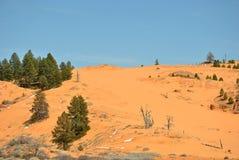 Dunes de sable roses de corail Images stock