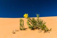 Dunes de sable roses de corail Photo stock