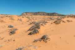 Dunes de sable roses de corail Photo libre de droits