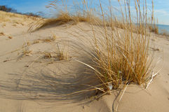 Dunes de sable sur la plage Photos libres de droits