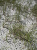 Dunes de sable sur le Long Island Photographie stock
