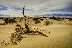 Dunes, death valley Stock Images