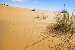 Dunes of desert Royalty Free Stock Photo