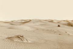 Dunes in the desert Royalty Free Stock Images
