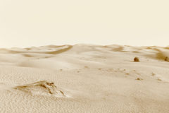Dunes in the desert Stock Photos