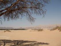 Dunes in the desert. Sand dunes in Arava desert Royalty Free Stock Photo