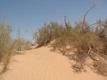 Dunes in the desert. Sand dunes in Arava desert Stock Photo