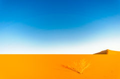 Dunes in the dessert of Morocco by M`hamid Royalty Free Stock Photo