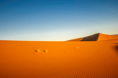 Dunes in the dessert of Morocco by M`hamid Royalty Free Stock Photography