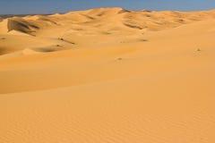 Dunes du Sahara Photo libre de droits