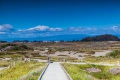 Dunes du Samoa dans l'Eureka la Californie Images libres de droits