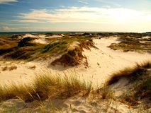 Dunes of Dueodde. Sand dunes and the beautiful beach of the village Dueodde on the Danish island of Bornholm is one of the most visited places by tourists Stock Photography