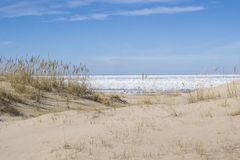 Dunes in the early spring in Jurmala Stock Photos