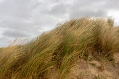 Dunes Egmond aan Zee, The Netherlands. Coastal dunes in Egmond aan Zee royalty free stock photo