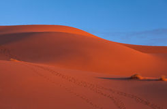 The dunes of Erg Chebbi desert Royalty Free Stock Images